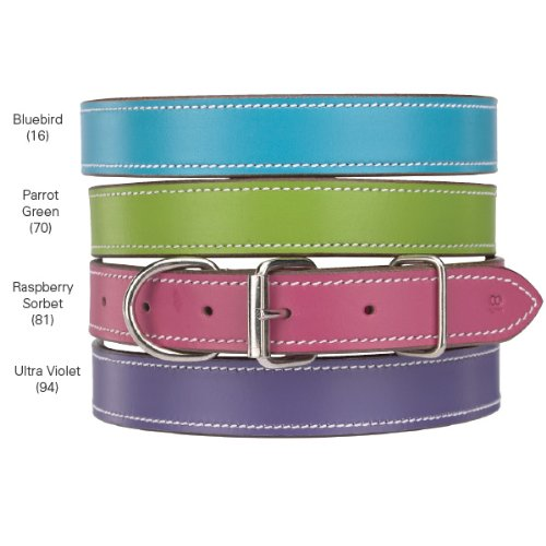 CC Leather Collar 11-14 In Ultra Violet