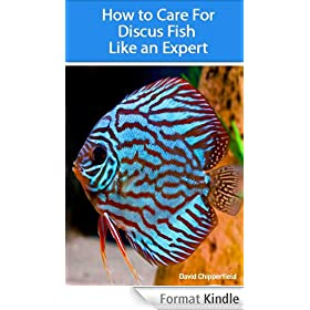 How to Care for Discus Fish Like an Expert