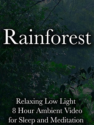 Rainforest Relaxing Low Light 8 Hour Ambient Video for Sleep and Meditation