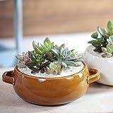 Ruplan 観葉植物 『多肉植物寄せ植え Assiette アシェット』 (ブラウン)