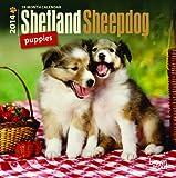 Shetland Sheepdog Puppies 18 Month 2014 Calendar (Multilingual Edition)
