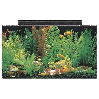 SeaClear 50 Gallon Acrylic Aquarium Combo Set Review