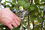 PROFESSIONAL PRUNING SHEARS - Black Pro Grade Bypa...