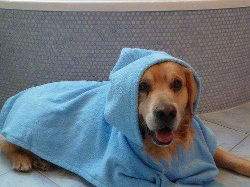 nähen schnittmuster: Bester Preis Hunde Bademantel - Badeponcho ...
