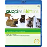 Puppies & Kittens [Blu-ray]by Timm Hogerzeil