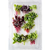 Microgreen 8 Main Type Of Green/red Leaf Seeds Combo By Raunak Seeds( Any 8 Available Seeds Combo)