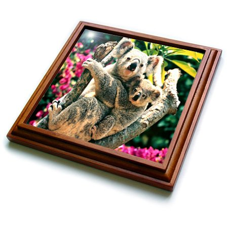 Baby Koala Images front-1042855