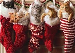 Avanti Press Christmas Cards, Stocking Full of Kittens, 10 Count (701154) by Avanti Press