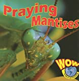 img - for Praying Mantises (World of Wonder) book / textbook / text book