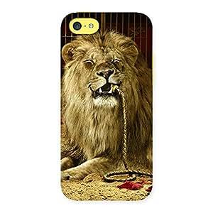 Ajay Enterprises Eli Dude Lion Multicolor Back Case Cover for iPhone 5C