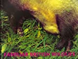 Clive Landen Familiar British Wildlife