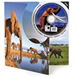 Elephant DVD Theme Card - Blank Greetings Card For Any Occasion