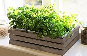 kitchen herb aged grey windowsill planter box with 6 steel pockets
