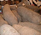 African Tuber of Yam (5 Tubers)
