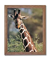 African Giraffe Bird Close Up Animal Wildlife Home Decor Wall Picture Oak Framed Art Print