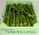 京都産 「京野菜」 万願寺とうがらし 1kg