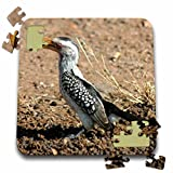 Angelique Cajams Safari Birds - South African Hornbill - 10x10 Inch Puzzle (pzl_26838_2)