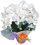 光触媒 枯れない胡蝶蘭 3本立 (造花) 白