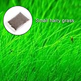 Kofun Aquatic Plant Seeds Fish Tank Water Ornamental Aquarium Decor 1 Bag Seeds of Small Leaf Grass