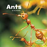 Image of Ants (Little Critters)
