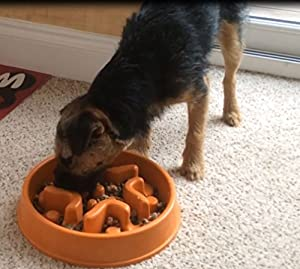 Slow Feed Dog Bowl   A-Maze-In-A-Bowl for Dogs   Interactive Feed Bowl - Slow Down Eating - Eco-friendly Durable Non Toxic Bamboo Fiber Dog Bowl - Designed By Veterinarians - Professional Design