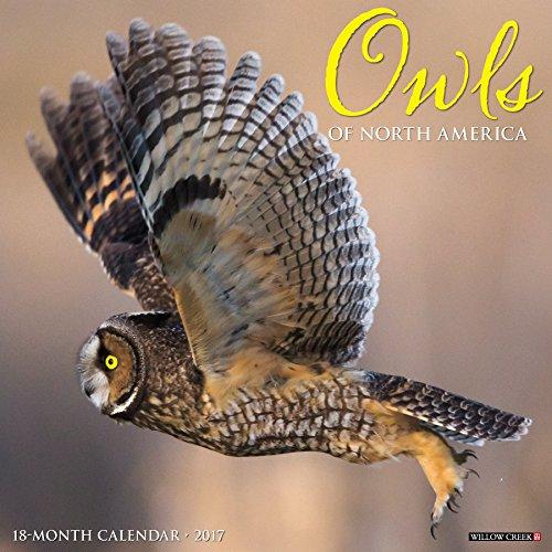 Owls 2017 Wall Calendar