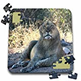 Angelique Cajam Big Cat Safari - Lion relaxing - 10x10 Inch Puzzle (pzl_26830_2)