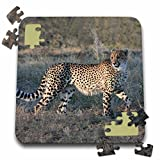 Angelique Cajam Big Cat Safari - South African Cheetah trotting side view - 10x10 Inch Puzzle (pzl_20112_2)