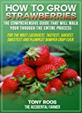 How To Grow Strawberries: The Comprehensive Guide That Will Walk You Through The Entire Process