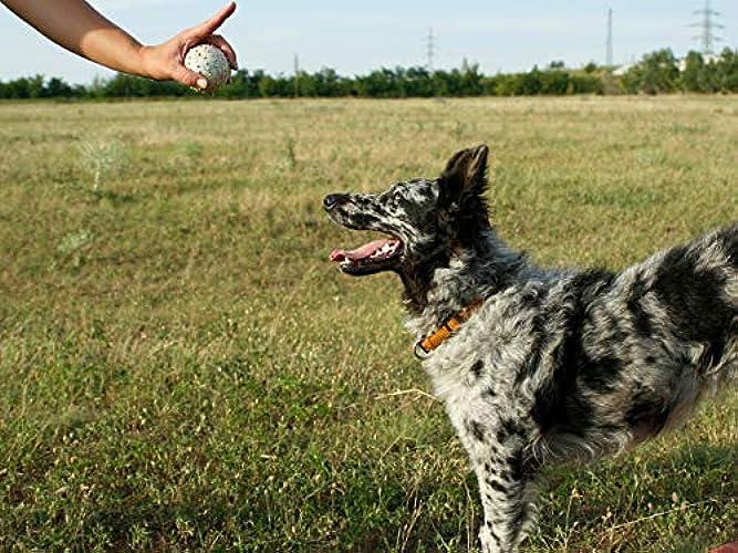 Dog Training 101 Season 1 Episode 10