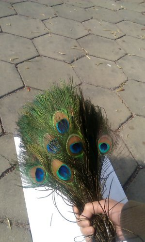 Urparcel 100pcs High Quality Real Natural Peacock Feathers About 10-12 Inches free shipping new original projector color wheel for sp8602 color wheel 1pcs