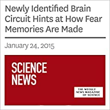Newly Identified Brain Circuit Hints at How Fear Memories Are Made Other by Ashley Yeager Narrated by Mark Moran
