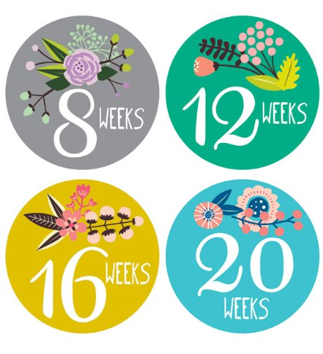 Lucy Darling Shop Pregnancy Belly Sticker - Floral Hand Lettering - Weeks 8 - 40 (12 Stickers)