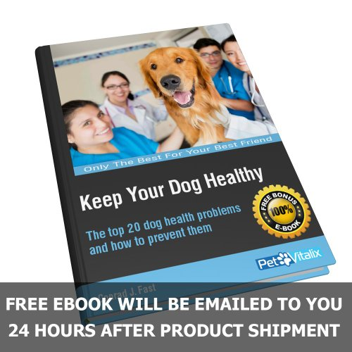 Best Supplement Prevent Dog Hip Dysplasia