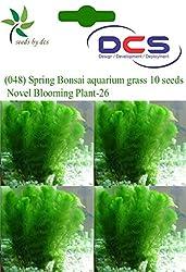 DCS (048) Spring Bonsai Aquarium grass 10 Seeds Novel Blooming Plant-26