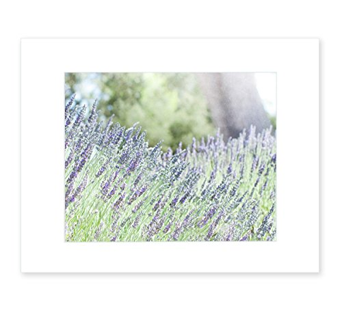8x10-matted-print-purple-lavender-wall-art-rustic-floral-decor-fields-of-lavender