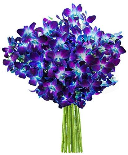 4th anniversary: Blue Orchid Fresh Flower Bouquet (20 Stems)