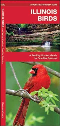 Illinois Birds: A Folding Pocket Guide to Familiar Species (Pocket Naturalist Guide Series)