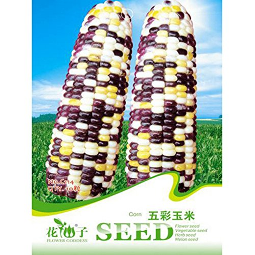 Colorful Green Corn Seeds Garden Vegetable Plants 10pcs (Giant Corn Dog compare prices)