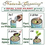 """Happy Birthday"" Planter Kit - Just Add Water and Watch Your ""Happy Birthday"" Message Grow Engraved on the Plant. 100% Guarantee to Grow Indoor/outdoor"
