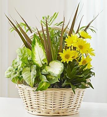 1-800-Flowers - With Love Dish Garden & Fresh Cut Flowers - Medium