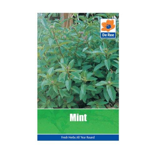 mint-seeds