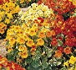 Premier Seeds Direct NAS06F Nasturtium Varigated Alaska Mix Finest Seeds (Pack of 60)