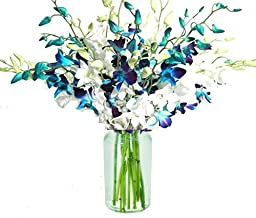 20 Blue and White Orchids with Vase