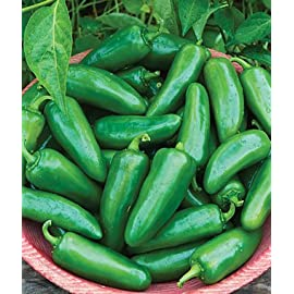 Big Guy Hybrid Jalapeno Pepper Seeds 10 Seed Pack by OrganicSeedSupply