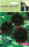 Johnsons Seed Sarah Ravens Cut Flowers Sunflower Black Magic F1