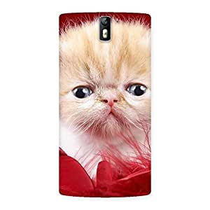 Impressive Kitty In Red Fur Back Case Cover for One Plus One