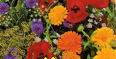 Buy Wildflower Premium Mix Seeds-1/4 lb. Covers 75 sq.ft – FREE SHIPPING ON ADDITIONAL HIRTS SEEDS