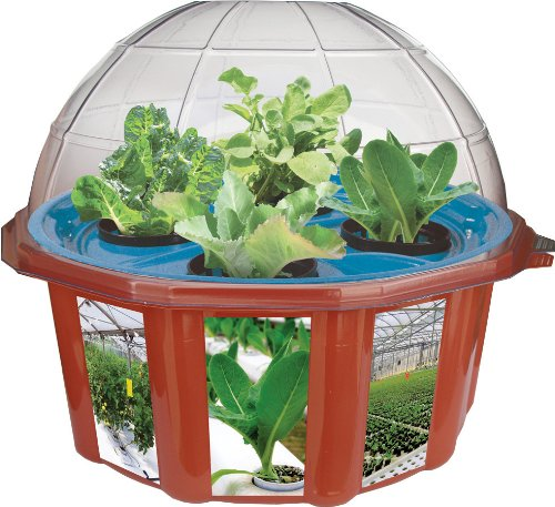 Dunecraft Dome Terrariums Hydro Dome Best Buy
