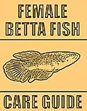 Female Betta Fish Complete Care Guide